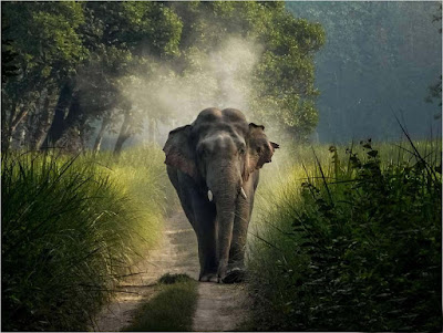 elephant-walls-nice-surrounding-pic