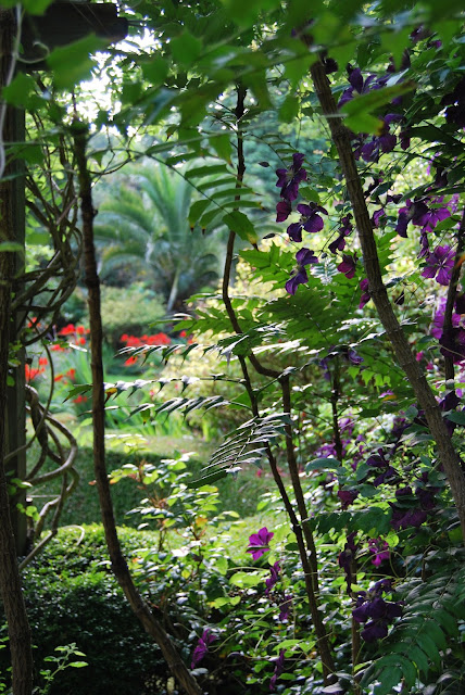 sub-tropical walled garden, Tregenna Castle, St Ives, Cornwall photo by modernbricabrac