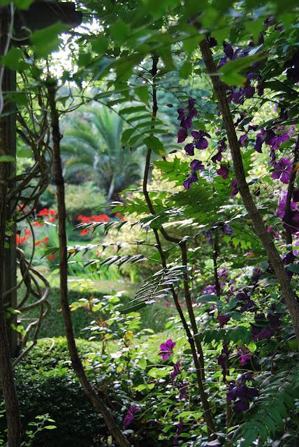 sub-tropical walled garden, Tregenna Castle, St Ives, Cornwall photo by modernbricabrac