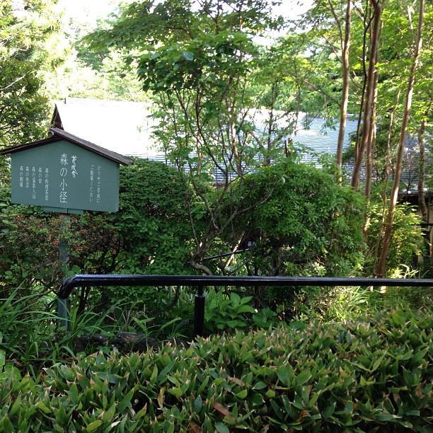 Baignade dans un Onsen au Japon
