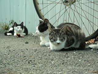 箱座り猫と奥の白黒猫
