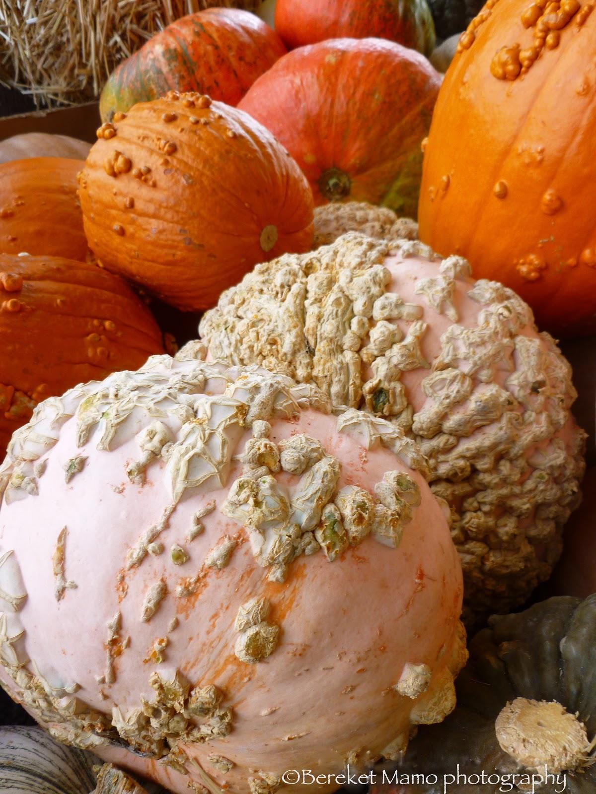 Deep Autumn Color Palette Bereketdecor Pumpkins Varieties