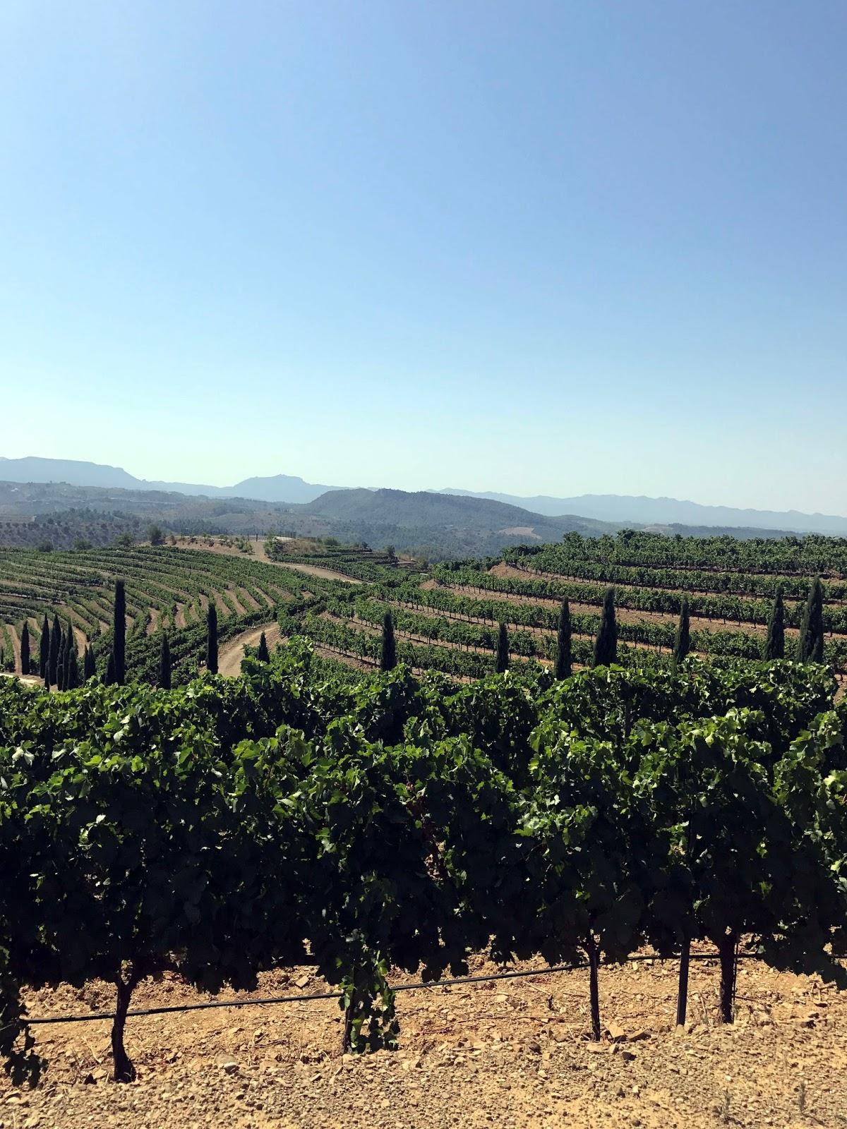 Stitch & Bear - The Priorat - Torres Priorat winery
