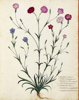 19th-century illustration of wildflowers