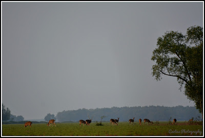 Deer in Nijhum Island, Nijhum Island Hatia, Trip Navigation Bangladesh, Nijhum Dwip Travel Guide