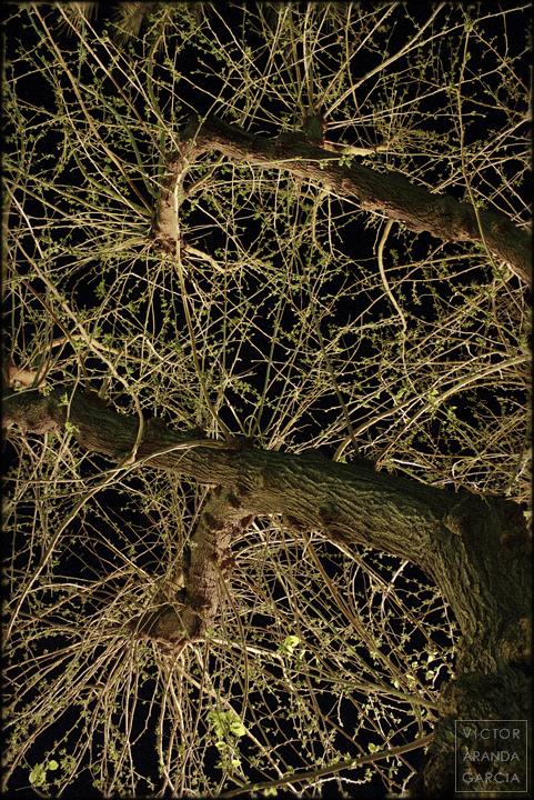fotografía, naturaleza, Valencia, árboles, ramas, noche, Límites