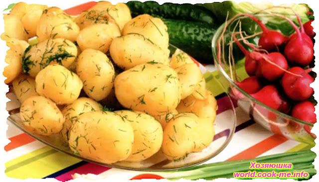 Немного из истории картофеля