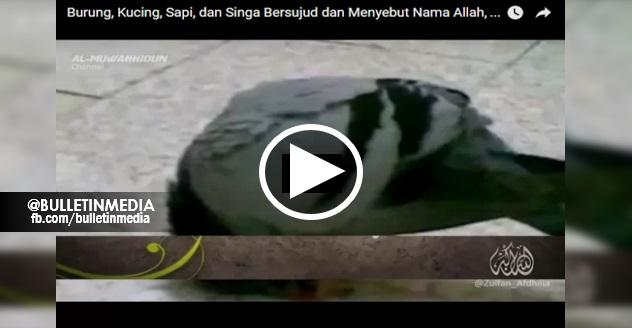 [VIDEO] SUBHANALLAH!! Burung, Kucing, Lembu DAN Singa Bersujud Sebut Nama ALLAH SWT !!