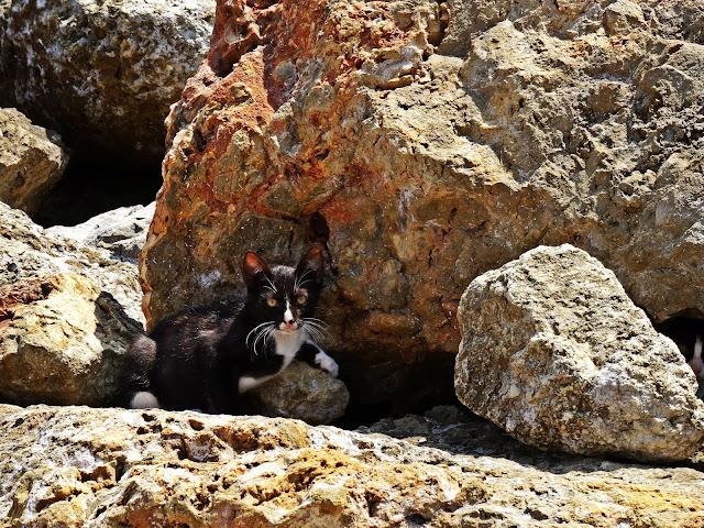 greckie koty jak wyglądają?