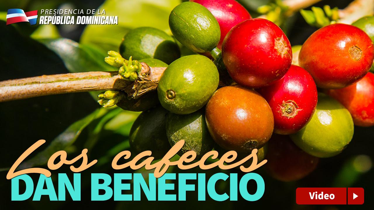 VIDEO: Los cafeces dan beneficio
