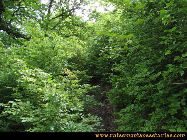Ruta Tielve Peña Maín: Vegetación sobre el camino