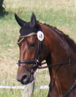 http://www.pferdezucht-franz.com/2009/06/don-frederico-stute-3-jahrig-0306.html