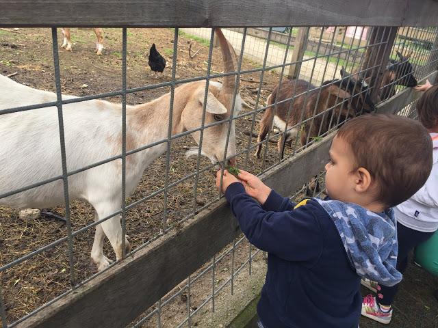 Gite in Lombardia: fra animali e natura alla Fattoria Pasquè