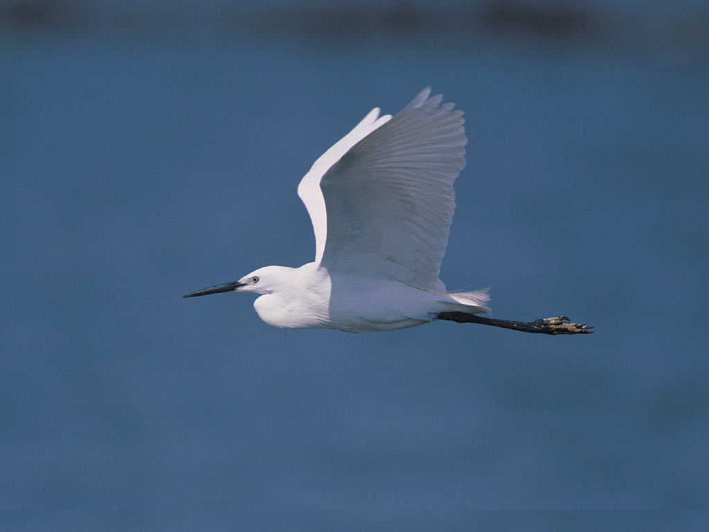 Fastest Internet In The World >> Beautiful Birds Flying - Mobile wallpapers