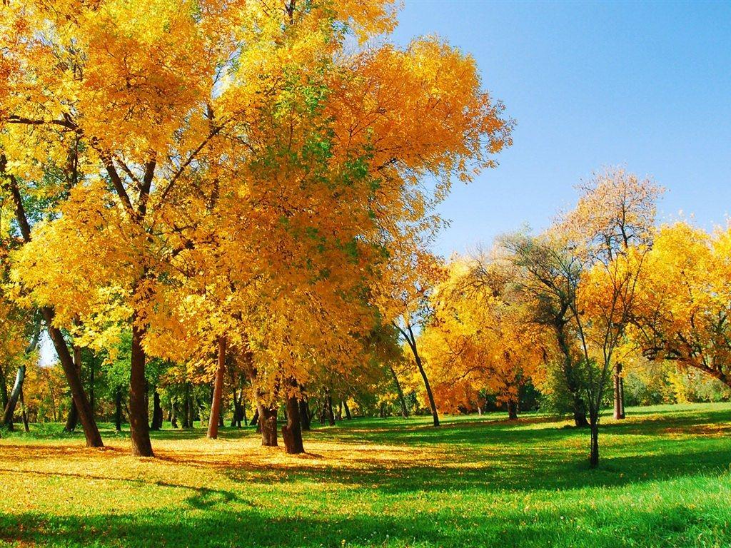 Autumn Season Wallpapers 5