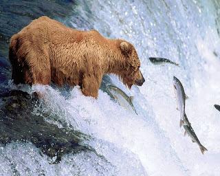 Belajar Dari Seekor Beruang
