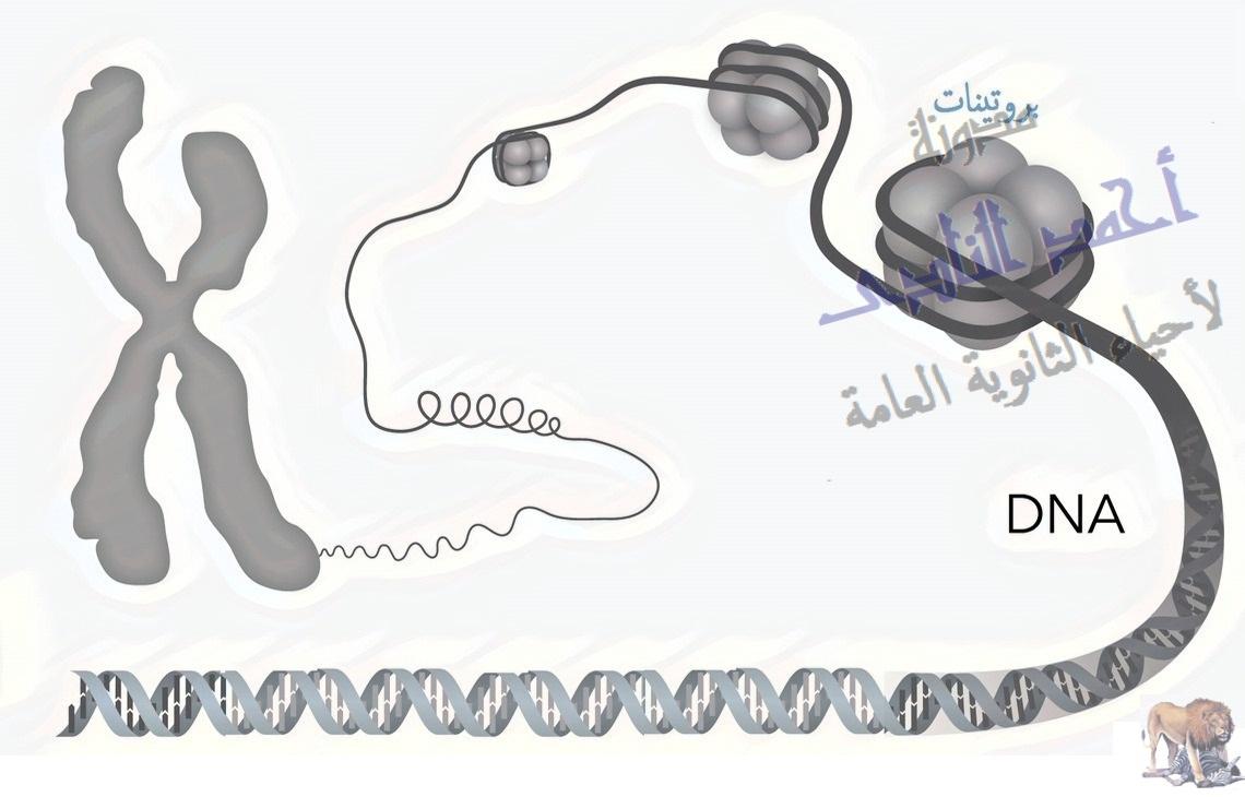 تكثيف dna-الحمض النووى ديؤكسى ريبوز - dna- صبغة الميلانين - لون الجلد