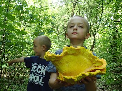 grzyby 2017, grzyby w maju, żółciak siarkowy, uszak bzowy