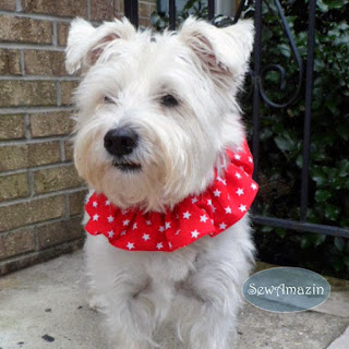 Red White Stars Dog Scrunchie Ruffle