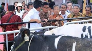 Kredit Usaha Rakyat (KUR) untuk peternakan