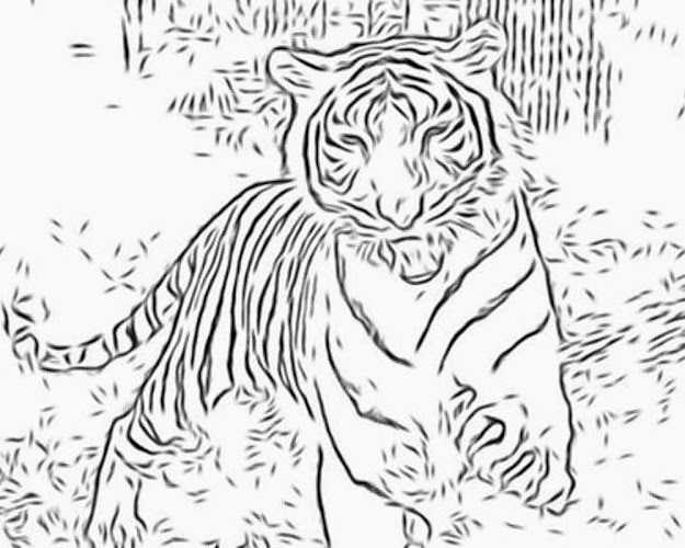 Detailed Coloring Pages For Adults  More Free Big Cat Coloring Pages  Personal Use Only