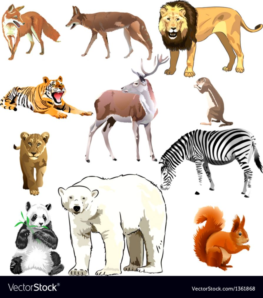 Wild animals Royalty Free Vector Image VectorStock