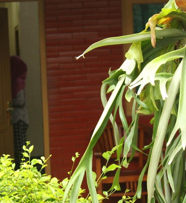 bunga anggrek dan gadis cantik