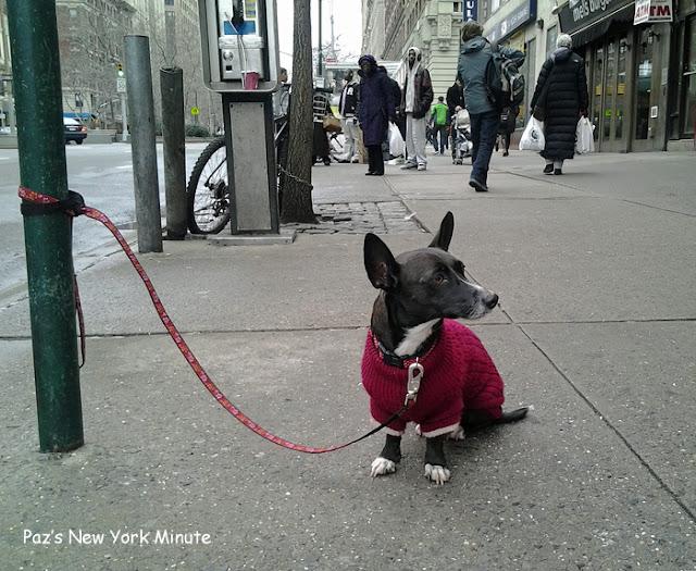 Perrito con suéter rojo atado a una farola esperando a su amo