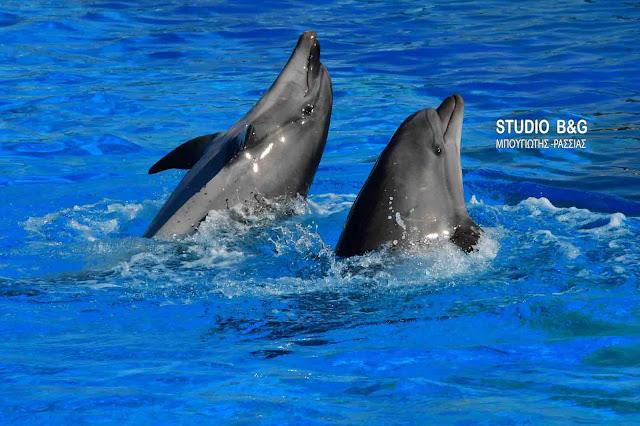 Η φωτογραφία της ημέρας: Τα δελφίνια του Αττικού Ζωολογικού πάρκου