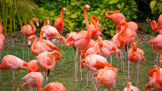Informações do Parque Jungle Island em Miami