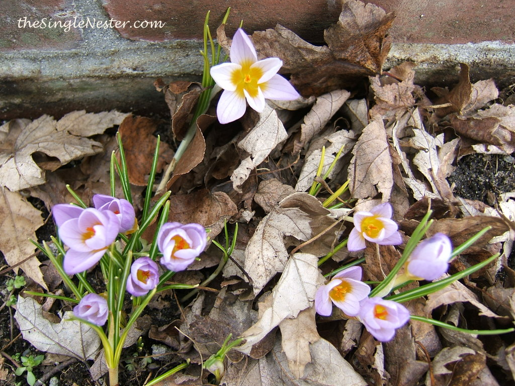 Lent - A Time for Renewal and Rebirth
