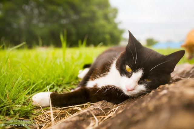 岩に寝そべりウットリしている白黒の猫