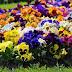 (Junho) Mês Das Flores - Contas Deletadas em Maio