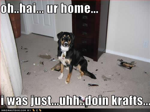 funny dog pictures with captions - photo #10