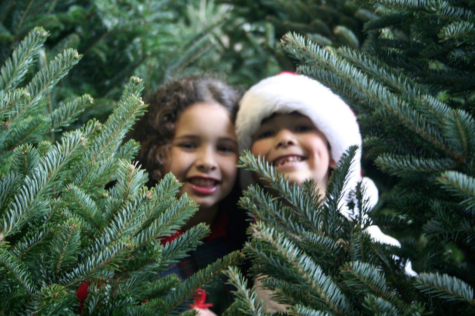 Christmas Tree Shopping With Children