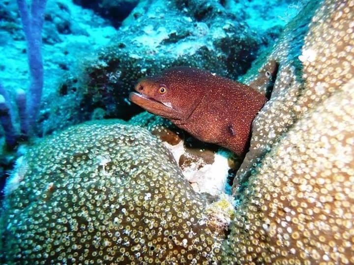Rumbo a la profundidad: Vida en el arrecife