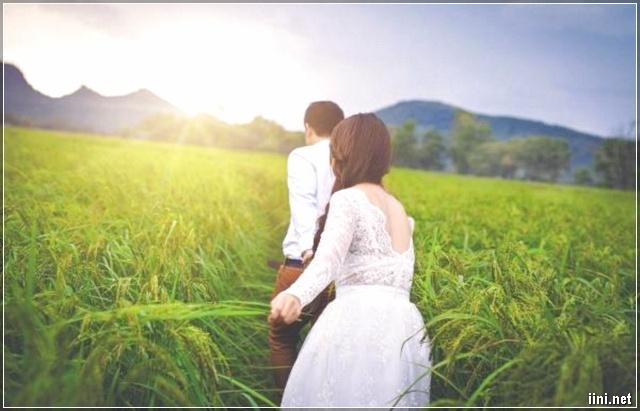 ảnh chú rể dắt cô dâu đi trên cánh đồng lúa
