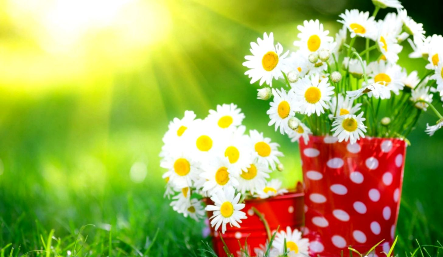 Flowers Nature Wallpapers Desktop Backgrounds Hd
