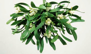 mistletoe the curious parasite essay Unitarian universalist church of tampa caring this is a rather curious conclusion given that three or four generations is liberal society a parasite.