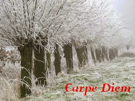 http://chevrefeuillescarpediem.blogspot.in/2015/01/carpe-diem-642-sacred-rope-shimekazari.html