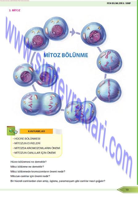 8. Sınıf Fen Bilimleri Öğün Yayınları Ders Kitabı Cevapları Sayfa 20