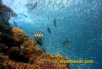 gambar binatang laut (air)