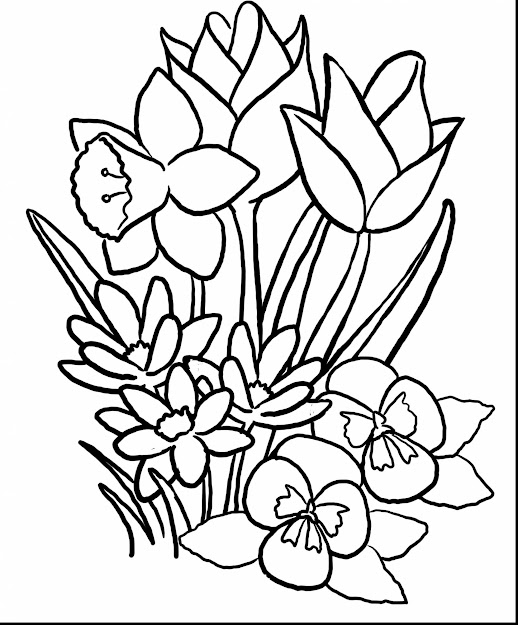 Spectacular Spring Flower Coloring Pages With Printable Flower Coloring  Pages And Printable Flower Coloring Sheets For