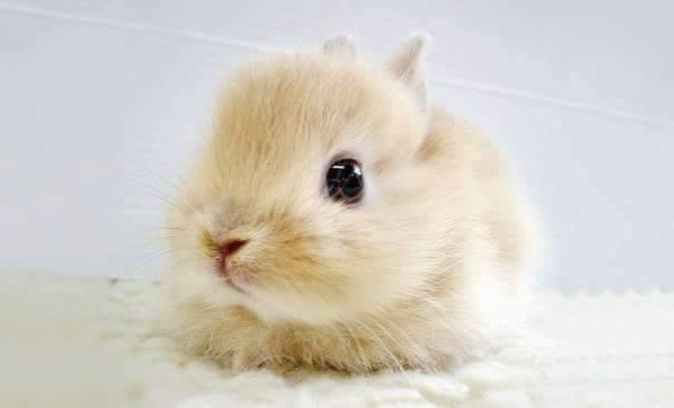lindos%2Banimais%2Bbebe%2B%2B%25282%2529 - Os filhotes de animais mais lindinhos que você já viu!