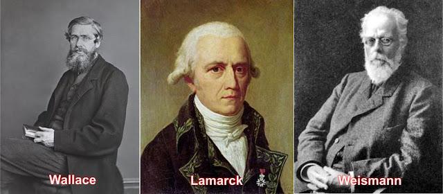 Wallace, Lamarck, Weismann