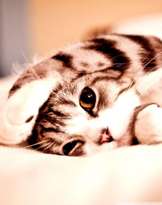 Cat Wallpapers Android Wallpapers Gallery