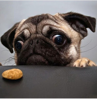 When to Start training Puppies