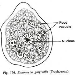 Deskripsi dan Contoh Protista Mirip Hewan(Protozoa) Sub Bab Rhizopoda