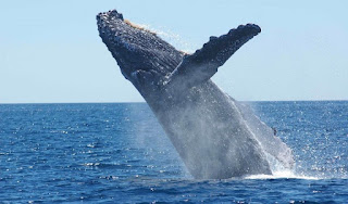 A Bitcoin Whale Sends BTC Full $ 720 Million to Wallet, Now What?