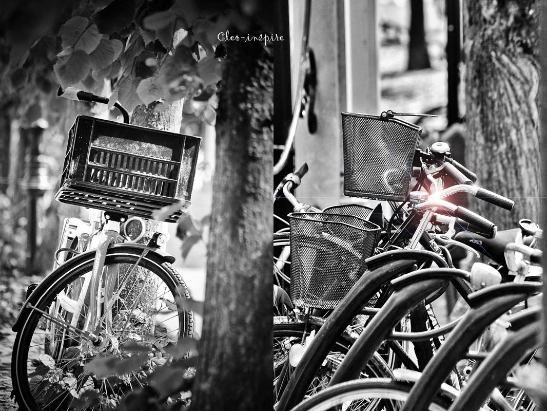 Holandia, rowery